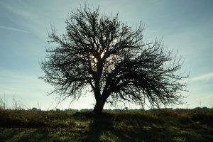 tree-233274_640