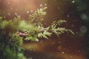 winter-1791370_640